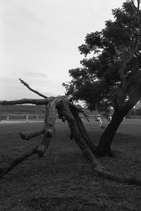 流木は絵になる - のっとこ