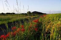 橿原市藤原宮跡夕暮散歩コスモスは咲いてないけど2/? - ぶらり記録 2:奈良・大阪・・・