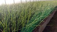 県立大学に農工連携拠点 - JA大潟村 組合長ブログ