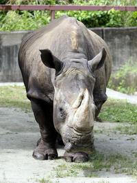 アフリカ園の動物たち - 動物園放浪記