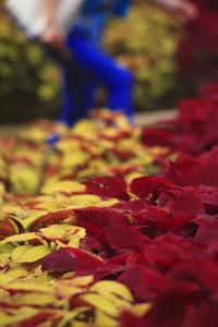 今日の森林公園秋の恋え - meの写真はザンス
