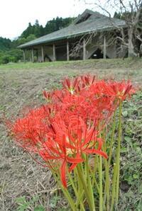 秋風に揺れて… - 千葉県いすみ環境と文化のさとセンター