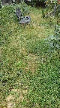 秋の草取り - ウィズコロナのうちの庭の備忘録~Green's Garden~