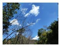青い空の山の草木(9/28の3) - あおいそら