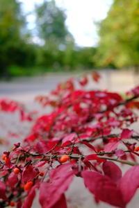 日々のコトの葉だより vol.14〜いろめがね?季節感たっぷりと。〜 - 北軽井沢スウィートグラス
