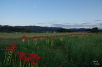 橿原市藤原宮跡夕暮散歩コスモスは咲いてないけど8/? - ぶらり記録 2:奈良・大阪・・・
