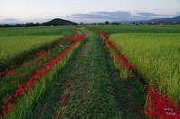 橿原市藤原宮跡夕暮散歩コスモスは咲いてないけど10/10 - ぶらり記録 2:奈良・大阪・・・