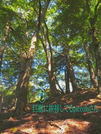 巨樹の森を彷徨い自然観察【奈良県】9/21 - 静かなお山の森歩き~♪