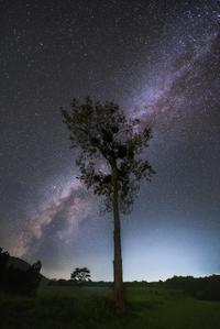 天地に宿る樹 - Qualia