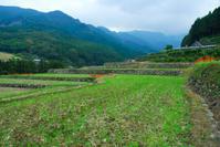 川内里山風景 - かたくち鰯の写真日記2