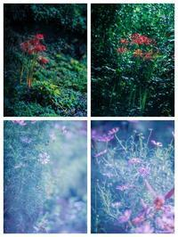 020ーautumn sec#11 - The collection of photograph