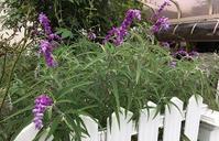 10月になりました庭の花 - ひとり言