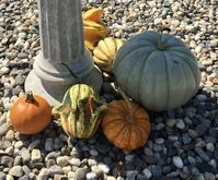秋です、パンプキンを探しに - ちょっと田舎暮らしCalifornia