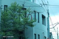 足立区の街散歩 499 「目黒区編」 - 一場の写真 / 足立区リフォーム館・頑張る会社ブログ