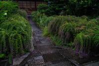 常林寺~萩 - 鏡花水月