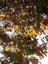 秋らしいね、、、 - hanasdiary.exblog.jp