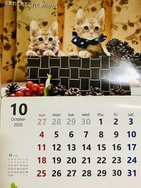 10月スタート - 猫多摩散歩日記 2