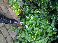 ず~~~と歩いても楽な靴!見つけた。 - 毎日がばら色