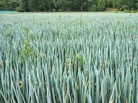 蕎麦畑の傍で兵庫県 - ty4834 四季の写真Ⅱ
