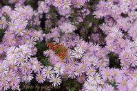 滝野公園の花と蝶 - White Love