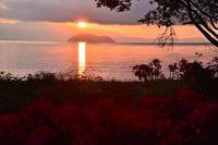 琵琶湖畔の彼岸花桂浜園地 - 峰さんの山あるき