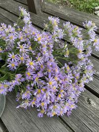 紫苑とススキをフラスコに挿して - CROSSE 便り