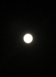 中秋の名月 - おかげ様でマメだるま