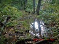 雨あがりの桑ノ木台湿原 - 花立の花情報
