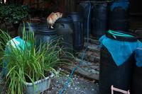 水飲み場 - 野良猫たちの風景