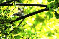 公園内で出会った野鳥・昆虫類、草花 - 何でも写真館
