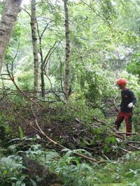 乱伐、間伐、植栽 - モルゲンロート