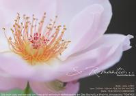 秋薔薇の季節SIGMA 105mm F2.8 DG DN MACRO 作例  #SIGMA105mmArtMACRO #SIGMA #sigmadgdn #マクロレンズ - さいとうおりのお気に入りはカメラで。