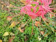 足元の花… - 侘助つれづれ