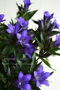 定期装花からリンドウ:義経慕情 - Impression Days