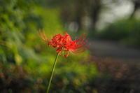 オールドレンズ by M43 - FUTU no PHOTO