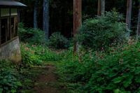 秋海棠咲く森(河内長野市・岩湧寺) - 花景色-K.W.C. PhotoBlog