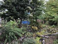 2020年9月までの庭の木々と花。 - あいやばばライフ