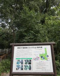西恋ヶ窪緑地 - ひのきよ
