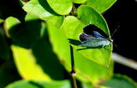 秋分水始涸(みずはじめてかるる) - 紀州里山の蝶たち