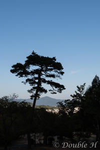 秋空に映える松 - one day, one photo
