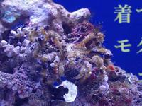 ROLAND魚録展③~モクズショイとヒメジャコガイ(アクアパーク品川) - 続々・動物園ありマス。