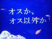 ROLAND魚録展④~スミレナガハナダイとプテラポゴン・カウデルニィ(アクアパーク品川) - 続々・動物園ありマス。