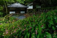 初秋の山野草たち(古知谷阿弥陀寺) - 花景色-K.W.C. PhotoBlog