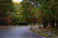 それでも秋は来る。2013年発売 sony α7R + Sonnar T* FE 55mm F1.8 ZA(SEL55F18Z) 実写 - さいとうおりのお気に入りはカメラで。