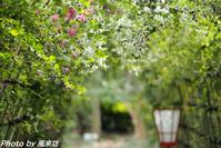 萩の花を愛でに向島百花園へ・・・ - 四季彩の部屋Ⅱ