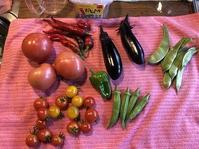野菜作り・・10月に入って・・。 - あいやばばライフ