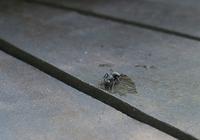 一匹の蟻ゐて蟻がどこにも居る 橋本多佳子 - 蛙声雑記 (From August 1, 2020)