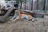 2020年9月王子動物園2その1 - ハープの徒然草