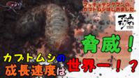 マッチョテングマンのカブトムシはじめました。 【脅威!カブトムシの成長速度は世界一!?】んの巻 - Matcyo公式ブログ 爆裂