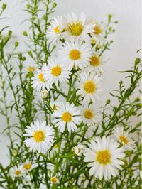 白い花 - ふたり暮らしの生活向上委員会